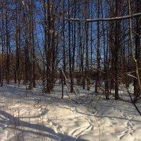 А в прошлом году солнце в январе было! :: Андрей Лукьянов