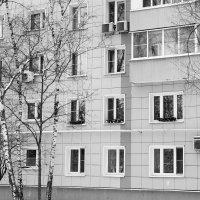 московские окна ... :: Yulia Sherstyuk