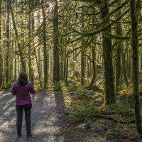 Волшебный лес :: Сергей Бушуев