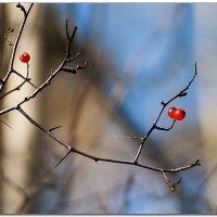 Краски осени :: Александр Нестеров