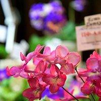 На выставке цветов :: Ирина Фирсова