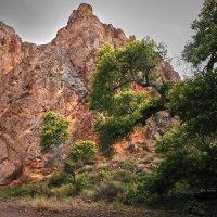 Долина замков, Чарынский каньон, Казахстан :: Val Савин