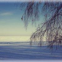 Январская прогулка :: Татьяна Степанова