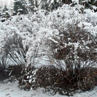 О себе напомнила зима...! :: Наталья