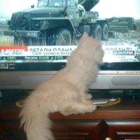 Ополченцы, вперед! :: Чария Зоя
