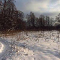 IMG_1989 - Снова зима настоящая :: Андрей Лукьянов
