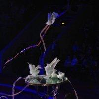 Белые голубки :: LitFox .......