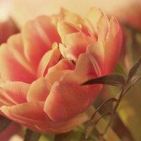 Тюльпаны поют о весне :: Swetlana V