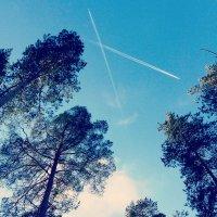 #planes #trees #pines :: Джастина Голополосова