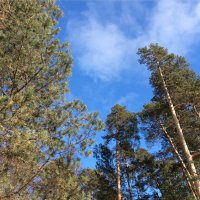 #forest #sun Без фильтра :: Джастина Голополосова