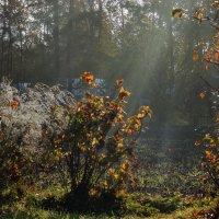Осеннее утро в росе... :: Сергей Щелкунов