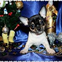 Новогодняя открытка для друзей собачников :: Анжела Пасечник