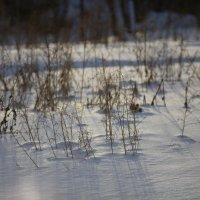 Снег :: Андрей Нагайцев