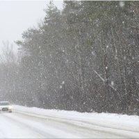 Снег в январе... :: Тамара (st.tamara)