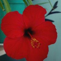 Красный цветок :: Николай Филоненко