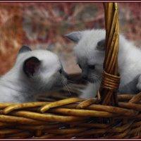 Лёвик и сеструха-из серии Кошки очарование мое! :: Shmual Hava Retro