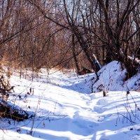в лес :: Сергей Сол