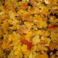 ковер из осенних листьев :: Елена Семигина