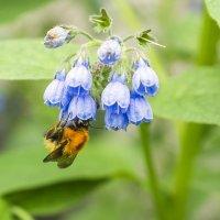Пчелка. :: Юрий Харченко
