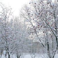 после снегопада... :: navalon M