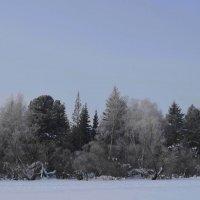 Зимнее утро :: Вера Андреева