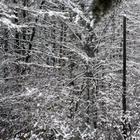 старый столб для проводки электричества на зимнем фоне :: Олег Лукьянов