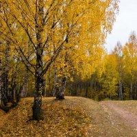 Осенний парк :: Валентин Котляров