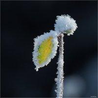 Хрупкая зима :: Swetlana V