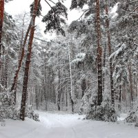 И вновь метелей сумрак белый... :: Лесо-Вед (Баранов)