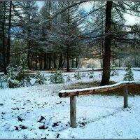 Сказка голубого леса :: юрий