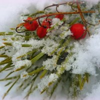 Зимняя ягода :: Павлова Татьяна Павлова
