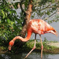 Розовый фламинго :: Галина