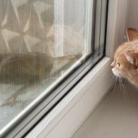 Встреча за окном :: Максимилиан Сребный
