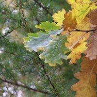 Вот и осень :: Михаил Андреев