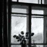 Розы. :: Надежда Павлючкова