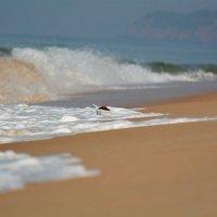 goa paradise beach :: Владимир Рубцов
