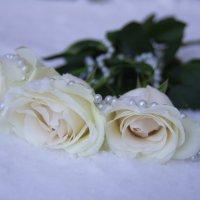 Укрыты розы жемчугом и снегом. Спят. :: Алеся Пушнякова
