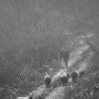 Shepherd :: ljiljasr