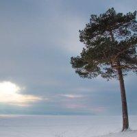 Одиночество :: Наталья Петрова