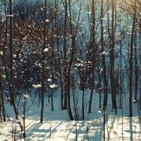 Зимний день :: Татьяна Бакулина