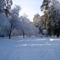в тени снегов... :: Галина Филоросс