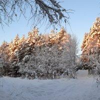 Перекрёстки зимы :: Ольга