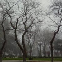 foggy winter in Baku :: maxim