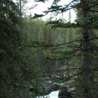 Таёжная река с водопадом в Скалистых горах. :: Владимир Смольников