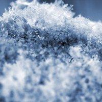 Снежок :: Лариса Корженевская