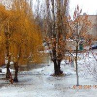 Плакучая Ива зимой :: Игорь Пахомов