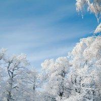зима :: Алёна Колесова