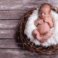 Новорожденный птенец :: Таня Мазур