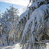 Принакрыло снегом :: Наталья Джикидзе (Берёзина)
