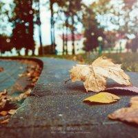 autumn minor :: Виталий Масюк